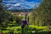 Firenze, l'Iris, il Cielo.....