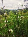 Montespertoli, Primavera fra gli Olivi
