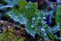 Perle mattutine, Gocce di natura, rugiada, gocce sull'erba