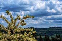 Fiori di Acacia e Castelli