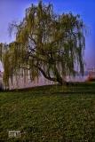 L'albero... dei desideri