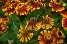 Fiori, rosso, verde, parchi, natura, colori, petali, polline, © Giuliano Corti Fotogiornalista