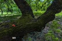 Giardino dell'Eden.... la Piantina Rossa