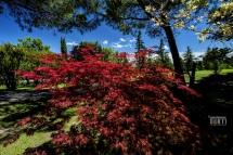 Valeggio sul Mincio, Parco Giardino Sigurta'