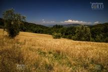 Via delle Rose, grano, bosco, campagna toscana